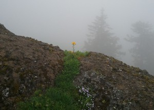 Flower in Fog